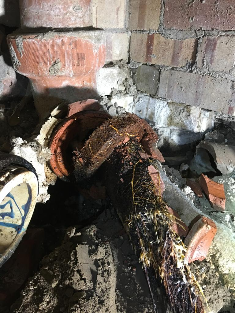 Top 6 Things that Can Compromise Your Home's Sewer